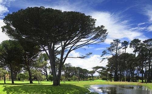 Investec SA Women's Open moves to Westlake